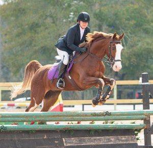 Activities – Lisa Morris on Leo Emily Stamboulieh Mod