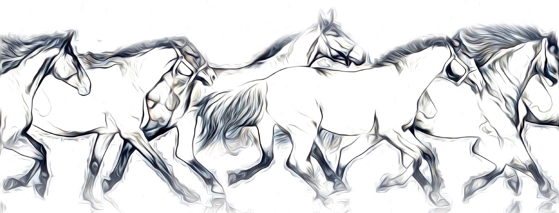 hoof armor_health horse